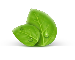 Fabryka zieleni